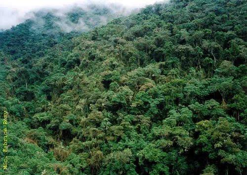 Asamblea Constituyente y Recursos Forestales