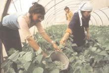 BoliviaPress 29 de mayo 2006: Gobierno reconduce política agraria en el marco de la Ley 1715