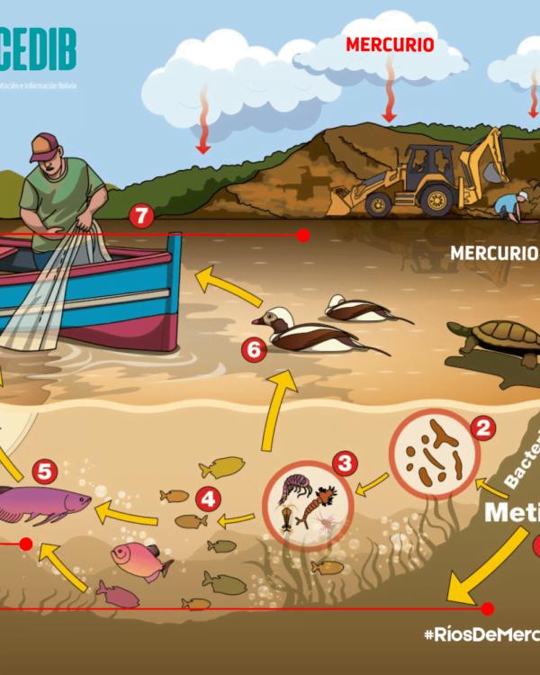 Ríos de mercurio: ¿Cómo llega el mercurio a nuestro organismo? II